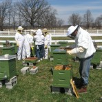 Bee Boot Camp (Beekeeping Classes) for 2017