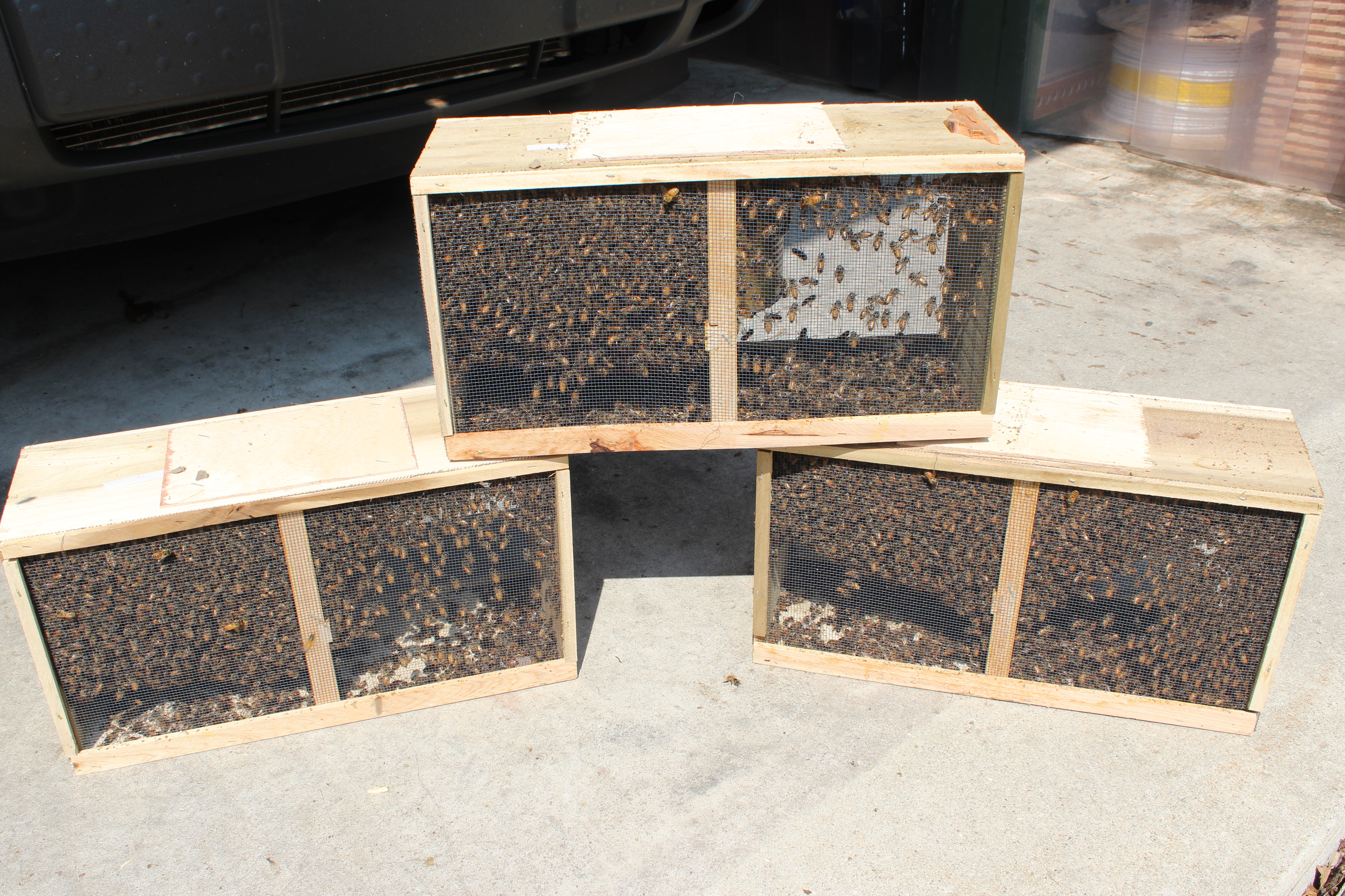 Bees For Sale  (SOLD OUT)