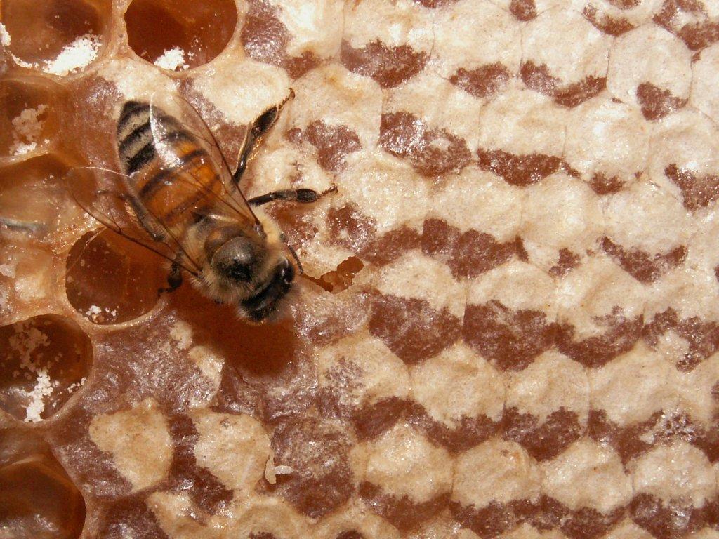 Is this Organic Honey?