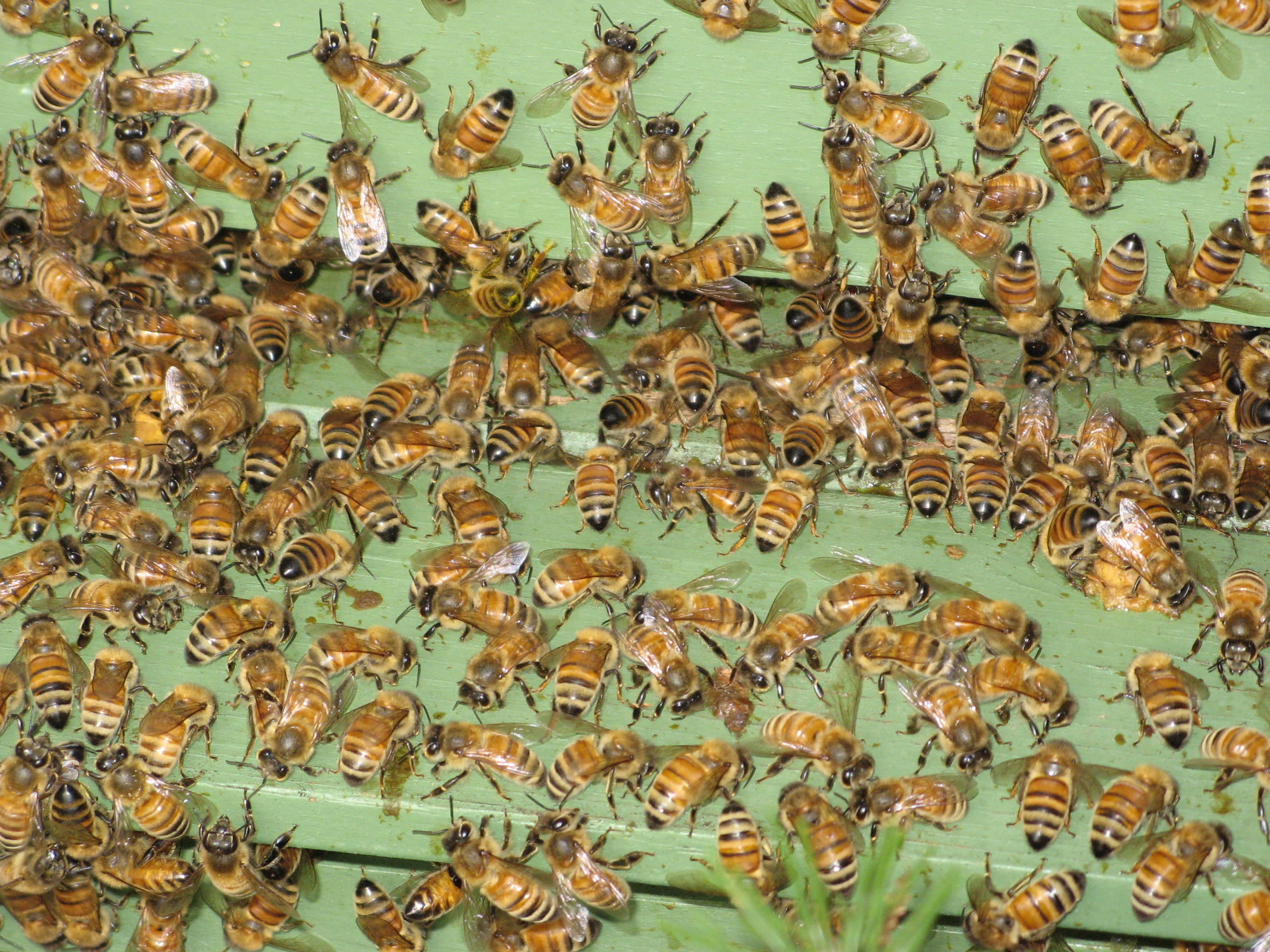 Early Summer Temperatures Can Drive Beekeepers Crazy