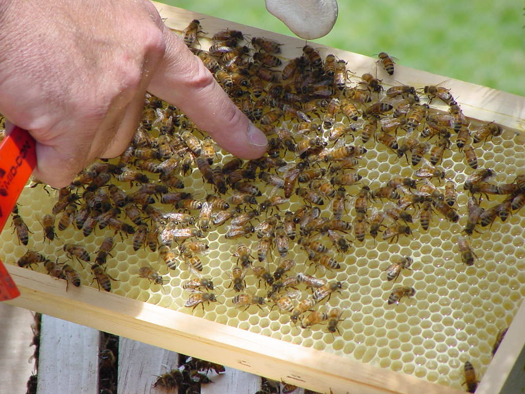 First Chelsea Michigan Area Bee Club meeting scheduled