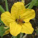 Bobilin Honey Gift CERTIFICATE. Good towards any product